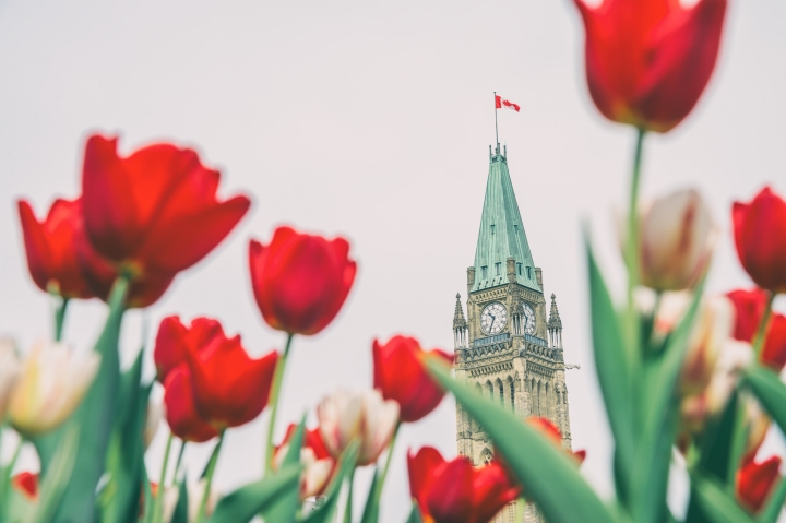 Festival des tulipes àOttawa